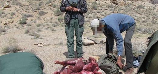 عاملین کشتار پنج راس کل وحشی دستگیر شدند