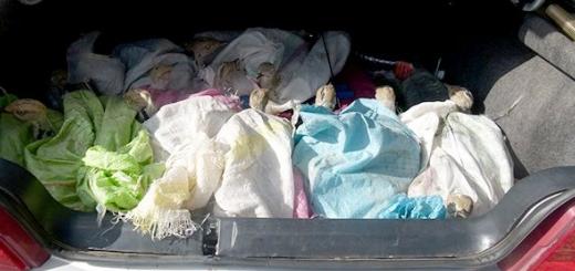 کشف محموله قاچاق پانزده هوبره در خراسان جنوبی
