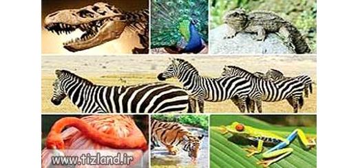 چگونه انقراض گونه های حیوانی، زندگی را بر انسان سخت تر می کند؟