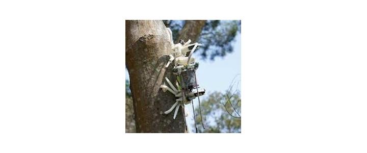 ربات باغبان از درخت بالا می رود