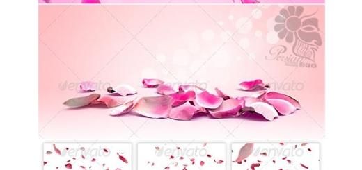 دانلود تصاویر لایه باز پس زمینه های مملو از گلبرگ های گل رز