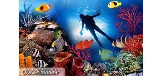 حیات در اقیانوس