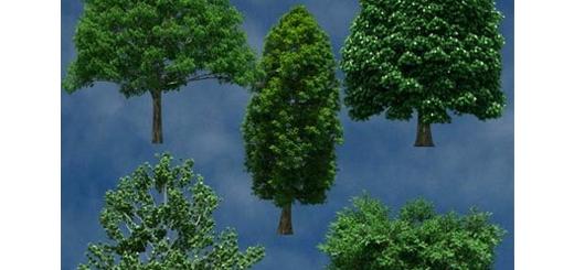 دانلود تصویر کلیپ آرت درختان متنوع در پس زمینه شفاف