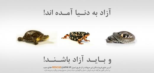 فروش گونه های ممنوعه در بازار نوروزی را گزارش کنید
