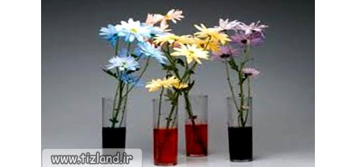 تغییر رنک گل در آب رنگی