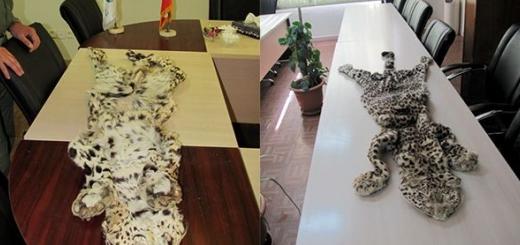 پوست پلنگ تازه شکار شده در تهران