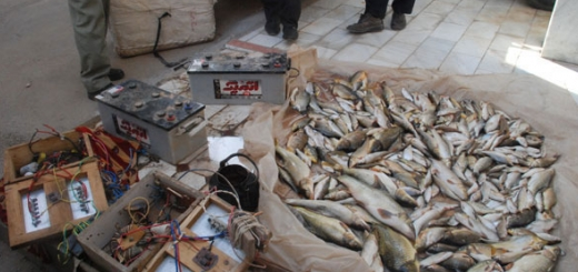 صید ماهی با شوک الکتریکی جرم است