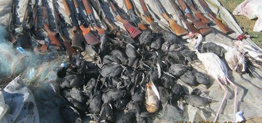 دستگیری ۱۷ متخلف، کشف لاشه ۵۹ چنگر و ۳ فلامینگو در میانکاله