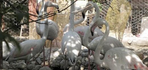 باغ وحش مخفی با بیش از یکصد جانور وحشی در خمینی شهر