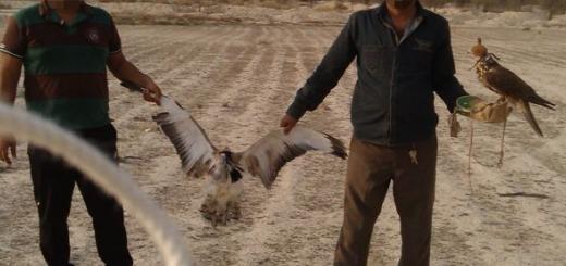 بازداشت ۶ تبعه امارات در کرمان به همراه ۶ باز شکاری