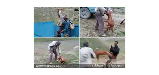 صدور رای پرونده عامل شکنجه سگ در کلاله (استان گلستان)