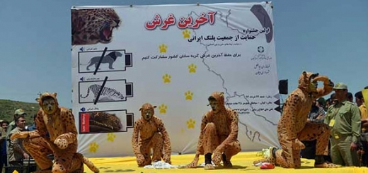 نخستین جشنواره حمایت از پلنگ ایرانی
