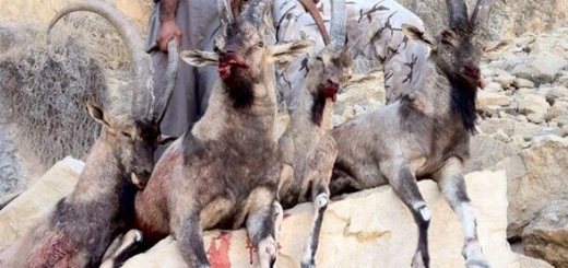 بزرگترین باند کشتار حیات وحش کشور متلاشی شد