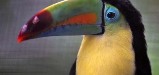 کاستاریکا در مسیر تعطیلی تمام باغ وحش ها