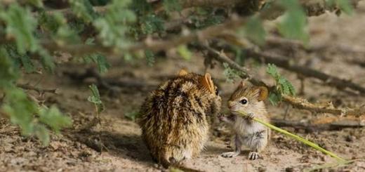 مهر مادری در حیوانات