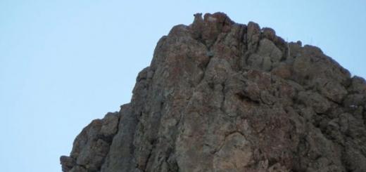 مشاهده پلنگ ایرانی در پارک ملی لار