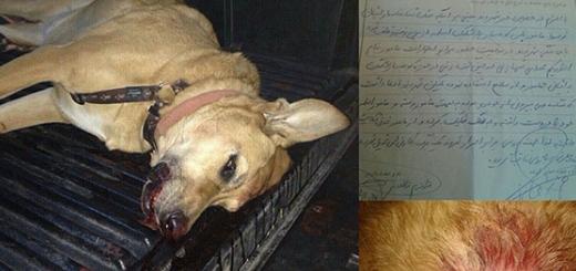 کشته شدن سگ بیگناه در برابر صاحبش با شلیک مامور پاسگاه کوهسار!
