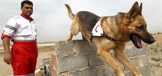 مرگ دومان.. باهوش ترین «سگ نجات» ایران