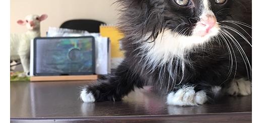نجات بچه گربه یکماهه از عمق چاه سه متری پس از سه روز