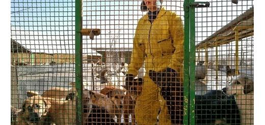 پناهگاه سگهای تهران/ تصویری