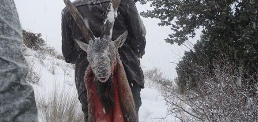 شکارچیان  کل وحشی در کولاک و برف ارتفاعات دربند هزار دستگیر شدند