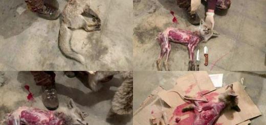 قاتل سگ سانان در شبستر دستگیر شد.