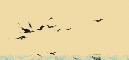سونات ها  آهنگساز: محمدرضا تفضلی پیانو: نادژدا خودینا و جولیتا واردانیان ویلنسل: آرام تالالیان  سونات برای پیانو سونات براى پیانو دارای سه موومان است و عناوین سه موومان آن برگرفته از فرم هاى هر موومان هستند. موومان اول (سونات) ابتدا با یک مقدمه آغاز مى شو