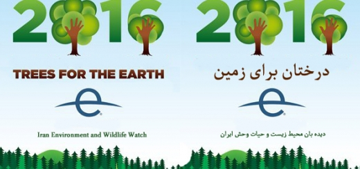 امروز روز جهانی زمین است...