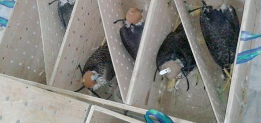 کشف محموله بزرگ قاچاق حیات وحش در جاسک