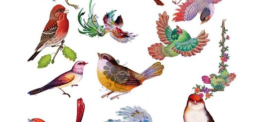دانلود 35 تصویر لایه باز پرنده های اسلیمی متنوع