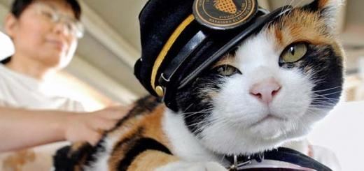 یک گربه رئیس ایستگاه قطار در ژاپن است