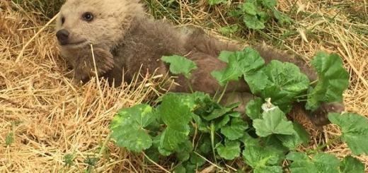دنا توله خرس کوچک و بازیگوش در پارک پردیسان