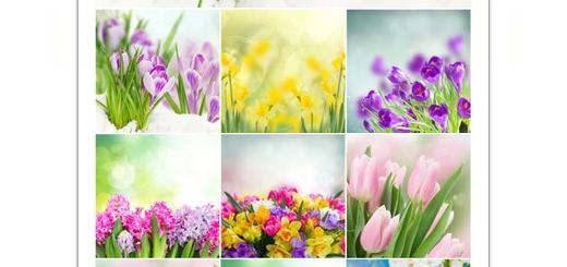 دانلود تصاویر با کیفیت گل های بهاری، گل لاله، گل سنبل و ...
