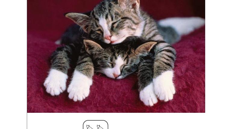 کتاب صوتی و تصویری I can nap برای کودکان