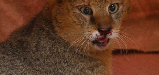نجات سه بچه گربه جنگلی در نخستین روز سال ۱۳۹۴