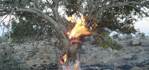آتش فقط درختان جنگل را نمی سوزاند...
