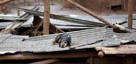 تلاش نیروهای امداد برزیل برای نجات حیوانات گرفتار در سیل