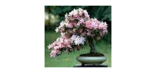 آموزش تصویری پرورش گیاهان زینتی ,درختی و باغچه ایی - سایت آبتینا