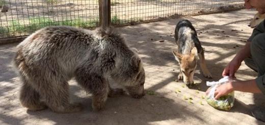آخرین وضعیت « دنا » توله خرس بازیگوش پارک پریسان